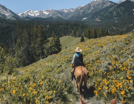 Montana Horse Riding - Mountain Home Montana
